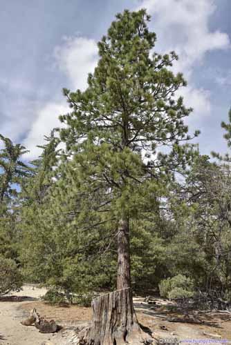 Trees along Trail