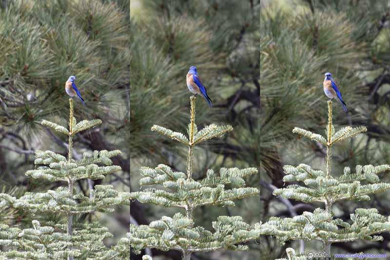 Bird on top of Tree