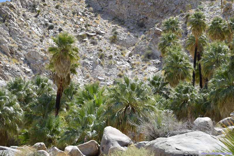 Palm Trees in Valley