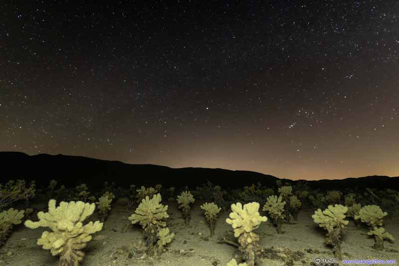 Cholla Cactus under Night Sky