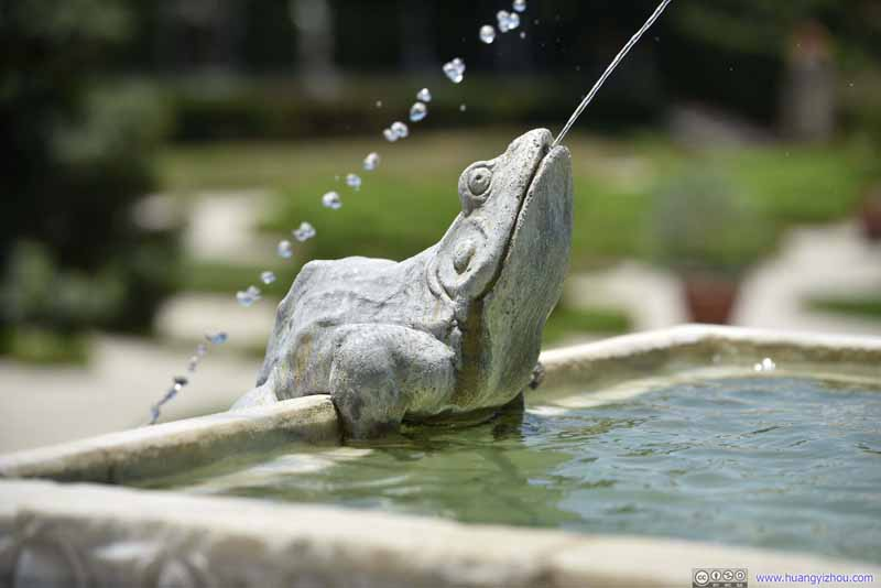 Frog Fountain