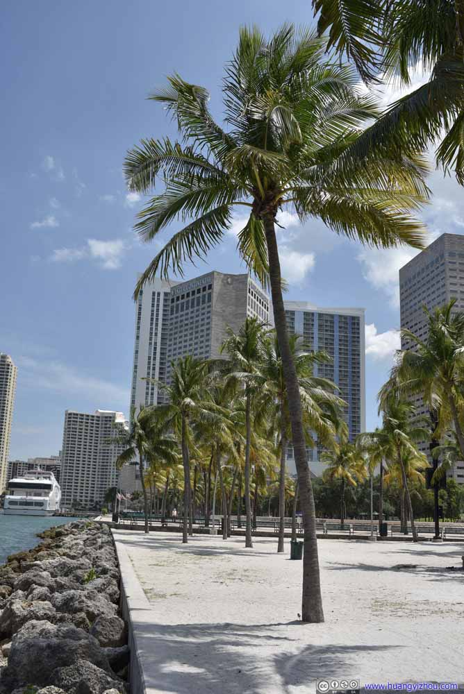 Waterfront Palm Trees