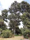 Typical High Trees