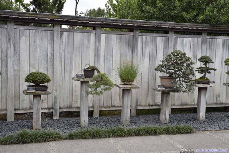 Bonsai Display in Japanese Garden