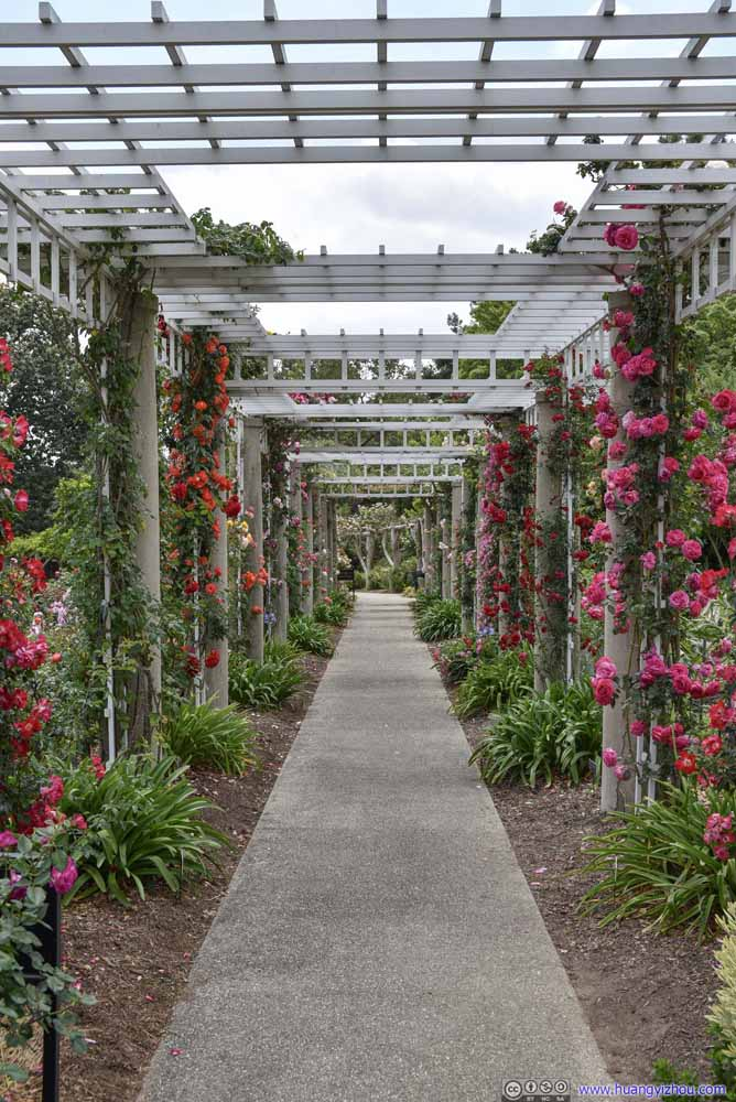 Passage Decorated with Roses